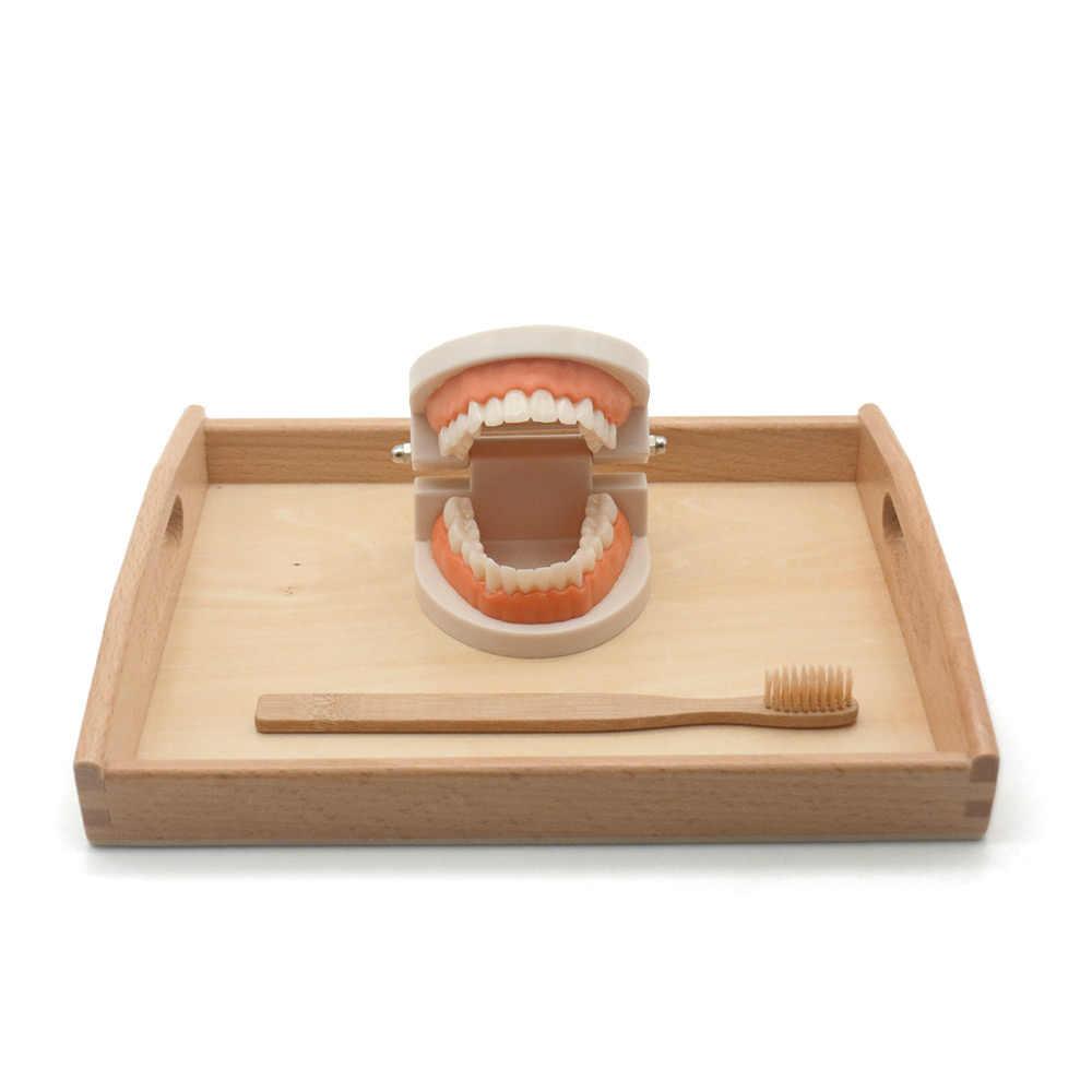 Criança montessori material de vida prática simulado dente brinquedo escovação dente auxiliares ensino escova de bambu com bandeja de madeira l1064h