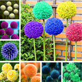 200Pcs Giant Allium Giganteum Семена Сад Природа растения для дома с ароматом фруктов и цветов по оптовой цене сущность маска для губ HCS-02