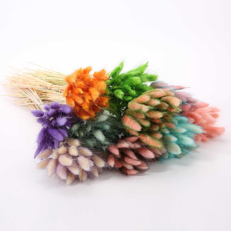 30Pcsหางกระต่ายหญ้าดอกไม้แห้งธรรมชาติสำหรับHomeตกแต่งดอกไม้Lagurus Ovatusจริงดอกไม้หญ้าProps