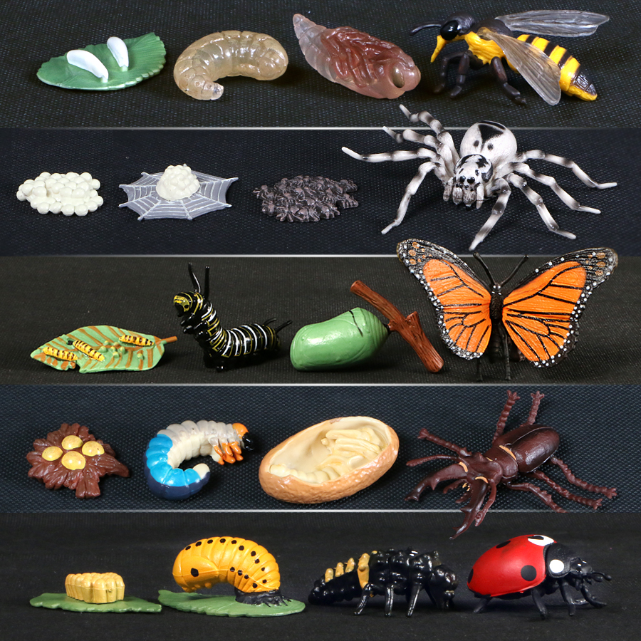 Цикл роста бабочек, пчела, божья коровка, паук, модели жизненного цикла, модель животного, фигурки, обучающий материал для детей