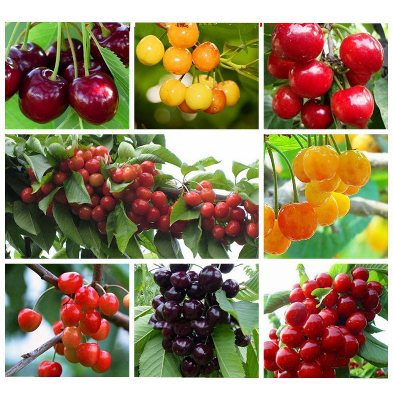 Mandarin Plant Fruits Bath Salts Cherry Essence AN-01ZZ 20PCS