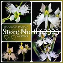 200 шт./партия, белая Орхидея, цветок орхидеи, бонсай, растения, редкий мир, голубь, орхидеи, цветок в горшках, для украшения дома и сада