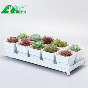 Meshpot Succulents Pot Flower Pot Planter Holder Root Controlling Basin Home Decor,No Root Rot Garden Pot (10PCS Pot + 1PC Tray) plant fungicides flowers and trees carbendazim systemic fungicide to prevent the root rot stem rot powdery mildew