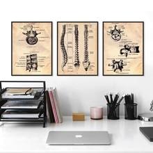 Человеческий позвоночник винтажные плакаты и принты руководство по терапии Анатомия иллюстрация Искусство Холст Живопись медицинский доктор офис Декор
