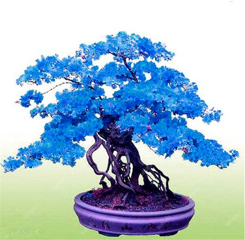 50pcs Mini Bonsai Azalea Rhododendron Potted Plants Tree Flower Perennial Evergreen Shrub Plants DIY Home Garden Decoration