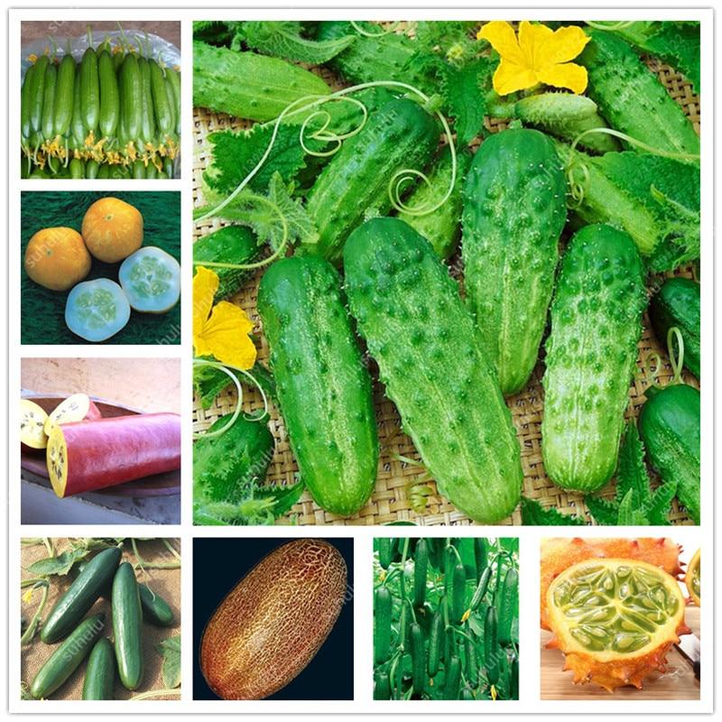 100 Pcs/bag Artificial Mini Cucumber