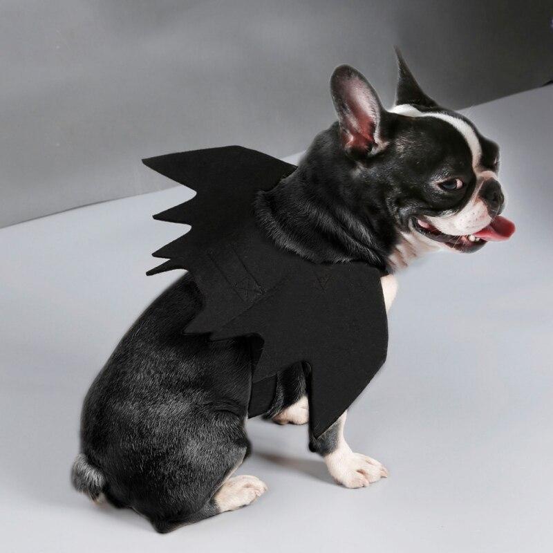 cat bat wings