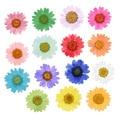 120 шт. прессованные сухие маргаритки, сухие цветы, растения для эпоксидной смолы, подвеска, ожерелье, изготовление ювелирных изделий, рукоде...