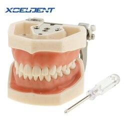 1 pçs goma macia todos os dentes dentários removíveis modelo 28 pçs dentes dental modelo para o novo dentista traning na escola