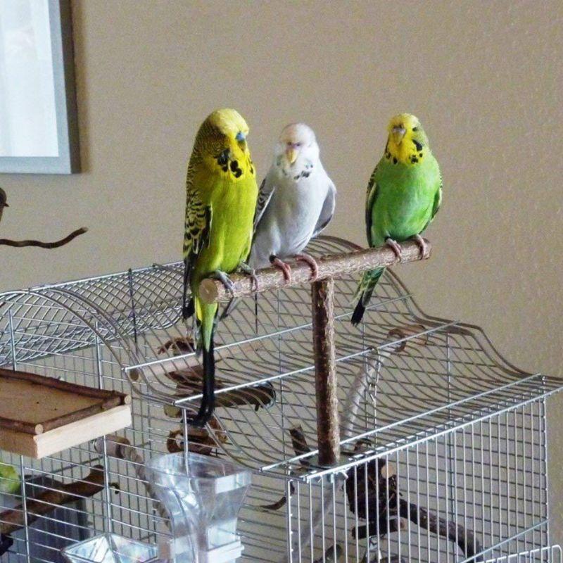 Parrots Bird Stand Bar Parrot Bite Chew Toys Swing Pet Rest Play Toy Supplies
