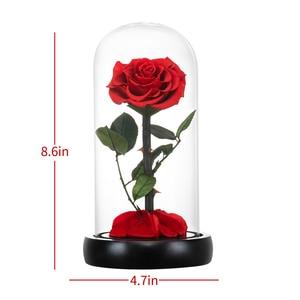 Image 4 - 2020 아름다움과 야수 신선한 꽃 발렌타인 데이 유리 돔에 빛으로 빨간 영원한 장미 크리스마스 선물 Dropshiping