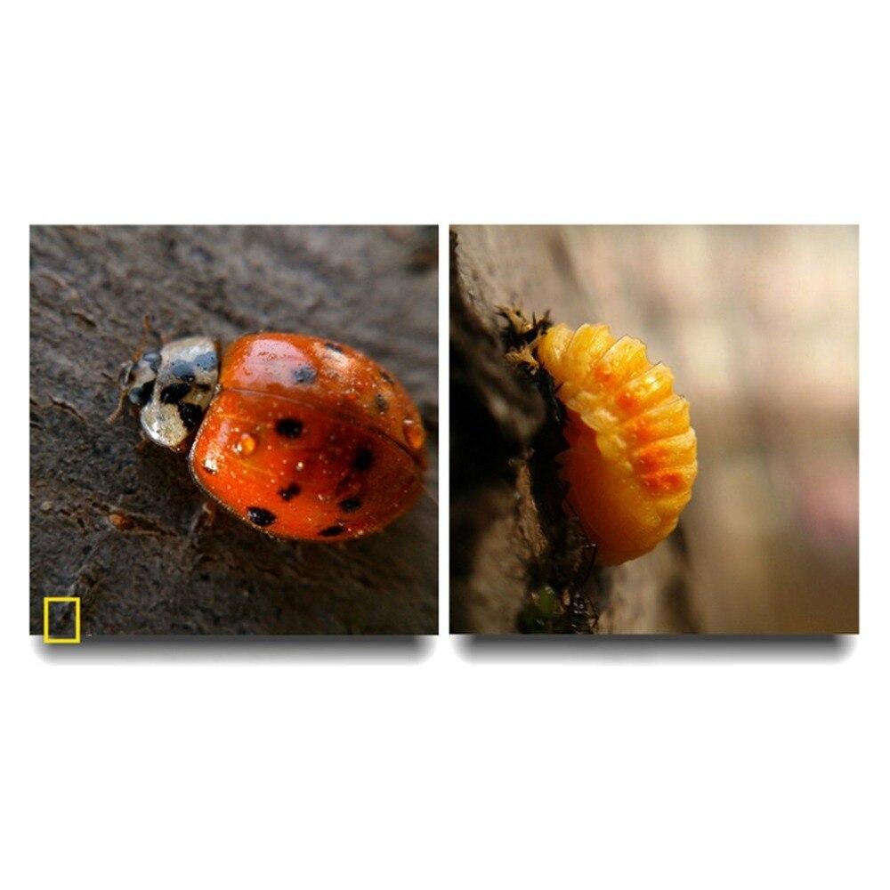 3 в 1 Многофункциональный телефон комплект объектива Рыбий линзы+ макросъемочные линзы+ Широкий формат объектив превратить телефон в профессиональный Камера