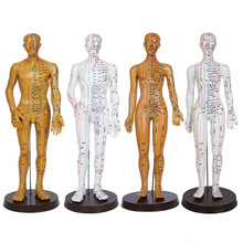 Female Male Acupuncture Model 52cm with Chinese Points & Base PVC Human Body Acupuncture Model Acupuncture Point Model DIY