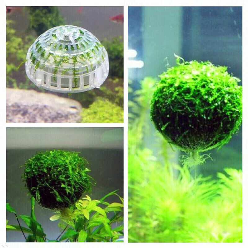 Hi Q 5cm Aquarium Fish Tank Media Moss Ball Live Plant Filter Filtration Decor in Cleaning from Home Garden