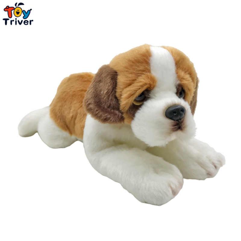 バーナード 子犬 セント