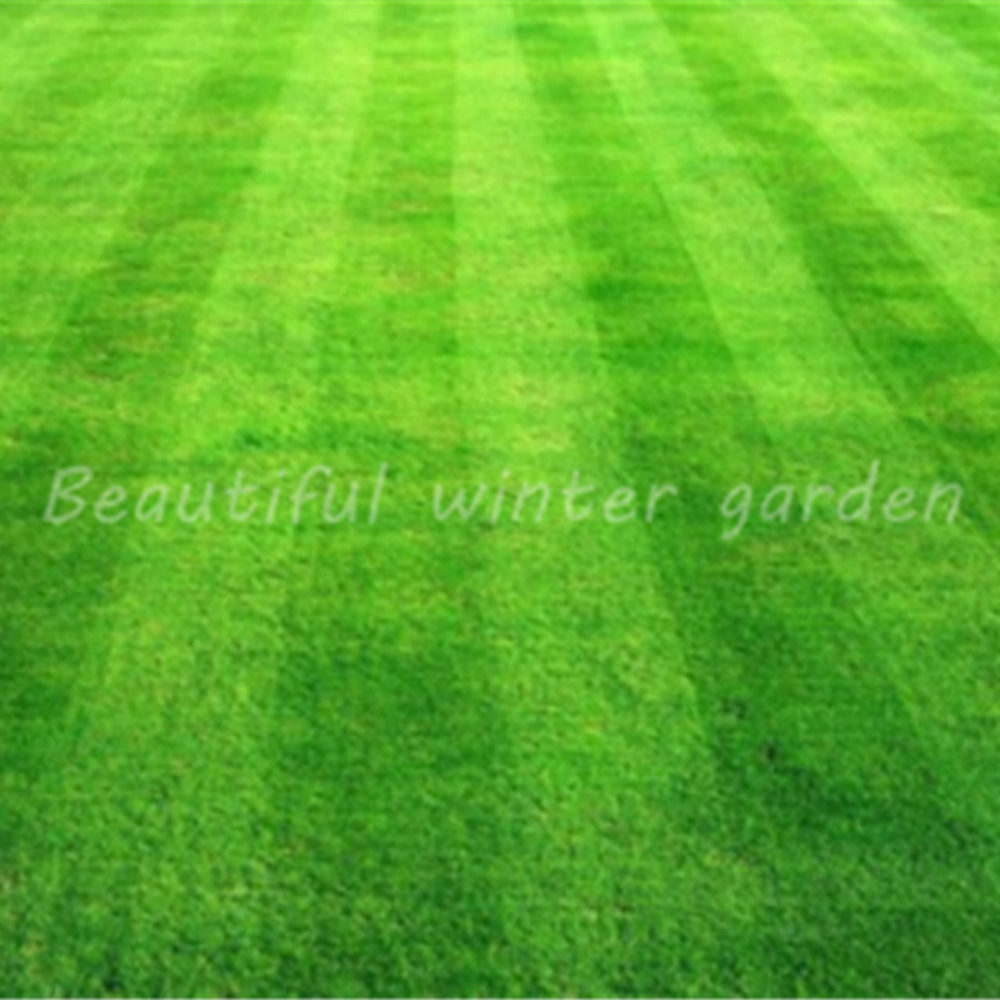 200 Pcs/bag Korean Lawn Grass (Zoysia Tenuifolia)Evergreen Lawn Flower Weed Bath Salts Outdoor Grass Plantas Bath Salt