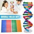 DIY DNA модель научный биологический эксперимент Дети DIY сборка обучающая игрушка горячие продажи