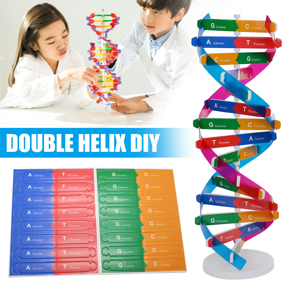 DIY DNA Model Science Biological Experiment Children DIY Assembly Educational Toy Hot Sales