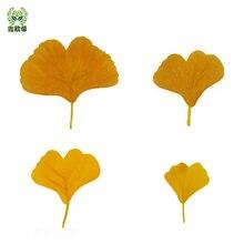 Xin ou grego monolítico ginkgo folha amarelo verde combinação local atmosfera decorativa