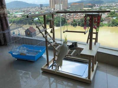 48*33*53cm ahşap papağan oyun alanı kuş levrek merdivenler ile besleyici papağan Bite oyuncaklar kuş çerçeve standı kafes kuş asma köprü