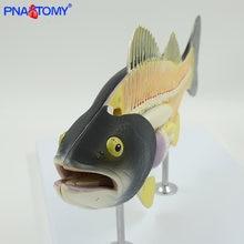 Рыба анатомическая модель рыбья кость weever животное Модель