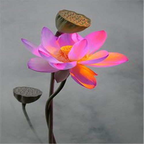 Hot-Sale-5-Pcs-Pack-Bowl-lotus-Bonsai-Hydroponic-Plants-Aquatic-Plants-FlowerPot-Lotus-Water-Lily (1)