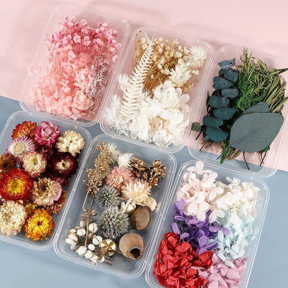 1 caixa colorida planta de flor seca real para aromaterapia vela resina cola epoxy pingente colar jóias fazendo artesanato diy acessórios|Flores secas artificiais|   -