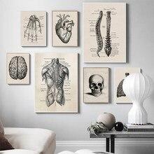 Estrutura do corpo humano poster do vintage esqueleto muscular impressão em tela moderna decoração de casa pintura da arte da parede nordic decoração imagem
