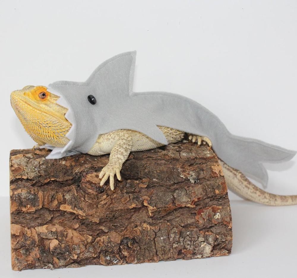 Shark Costume For Bearded Dragon Reptiles Clothes Lizard Shark Clothes Small Pet Clothes Gecko