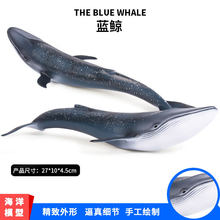 Children Cognitive Model Marine Organism Toy Animals Model Blue Whale Model Toy Static Garage Kit Decoration(China)
