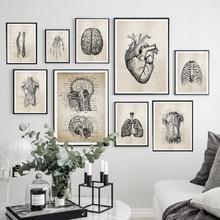 Anatomía esqueleto patente Vintage carteles e impresiones médico pared arte impresión lienzo pintura cuadros para sala de estar decoración del hogar