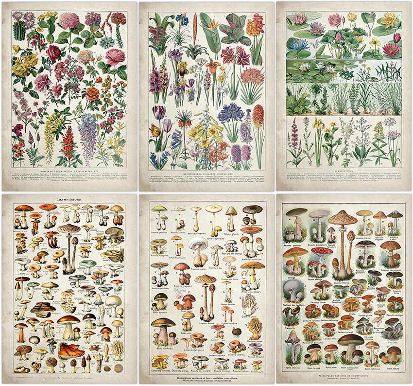 REDWPQ Botanique Affiche /Éducative Champignons Champignons Identification Tableau de R/éf/érence Diagramme Illustration D/écoration Murale 30x45 cm sans Cadre Multi