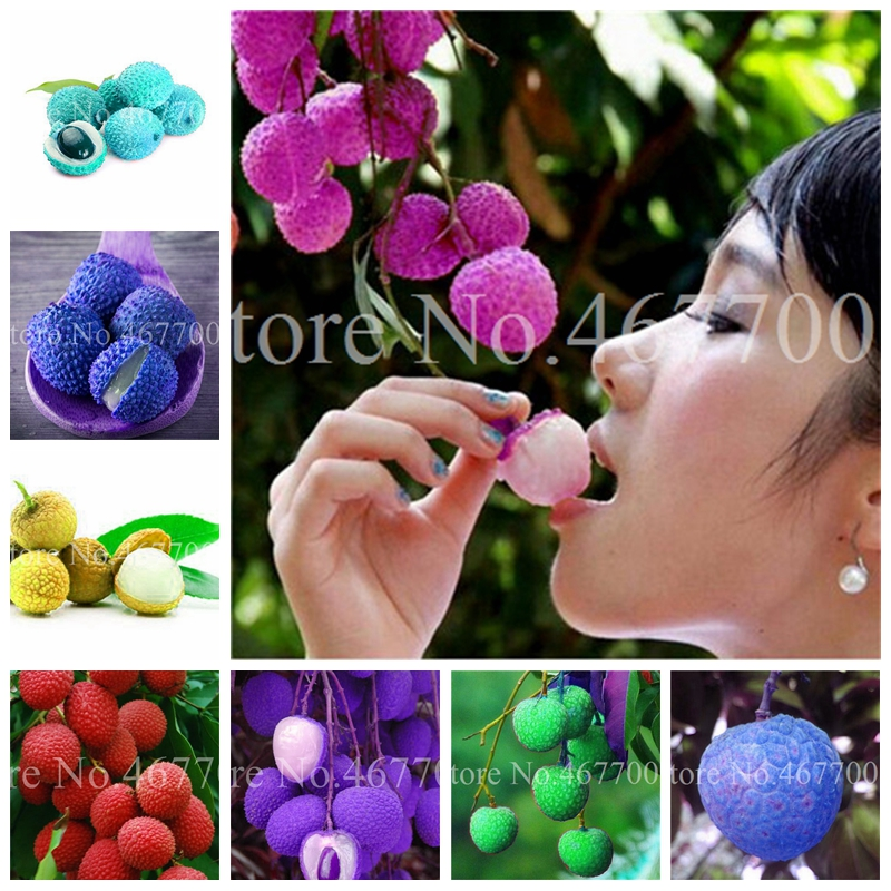 5 Pcs/ Bag Imported Litchi Giant Outdoor Lychee Home Garden Fruit Bonsai Tree House Plant Pot For Flower Pot Planter Easy Grow
