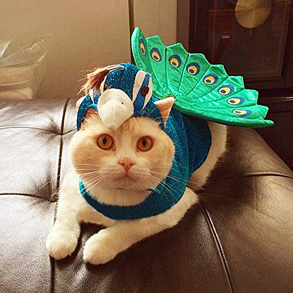 Animal Planet Peacock Dog Costume