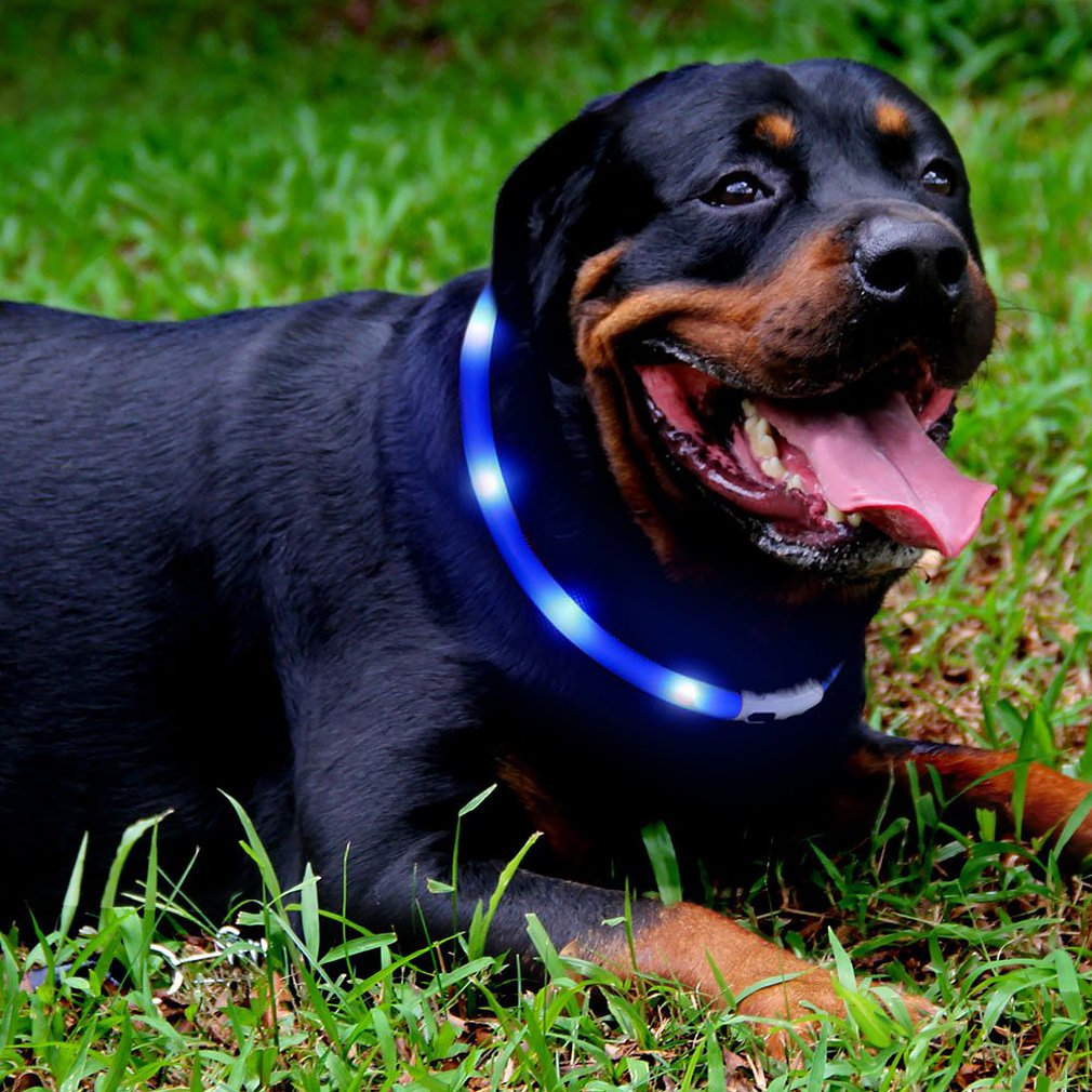 Led Pet Light Collar Silicone Waterproof Collar Night Anti-Lost Pet Glow Collar Usb Fluorescent Luminous Charging Dog Collar