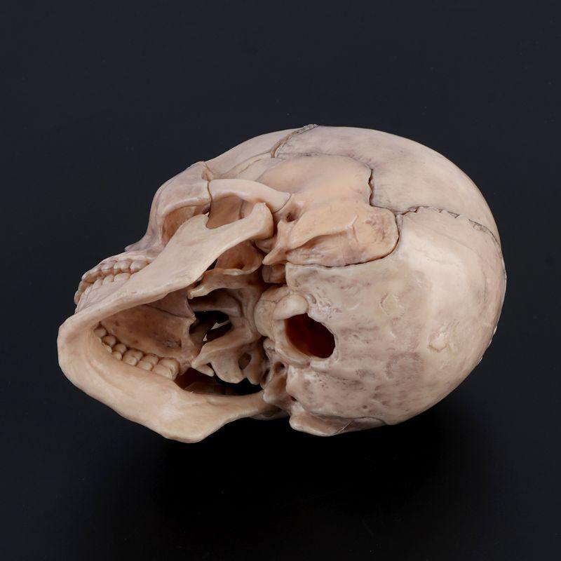 15 шт./компл. 4D разобранный череп анатомическая модель съемный медицинский обучающий инструмент