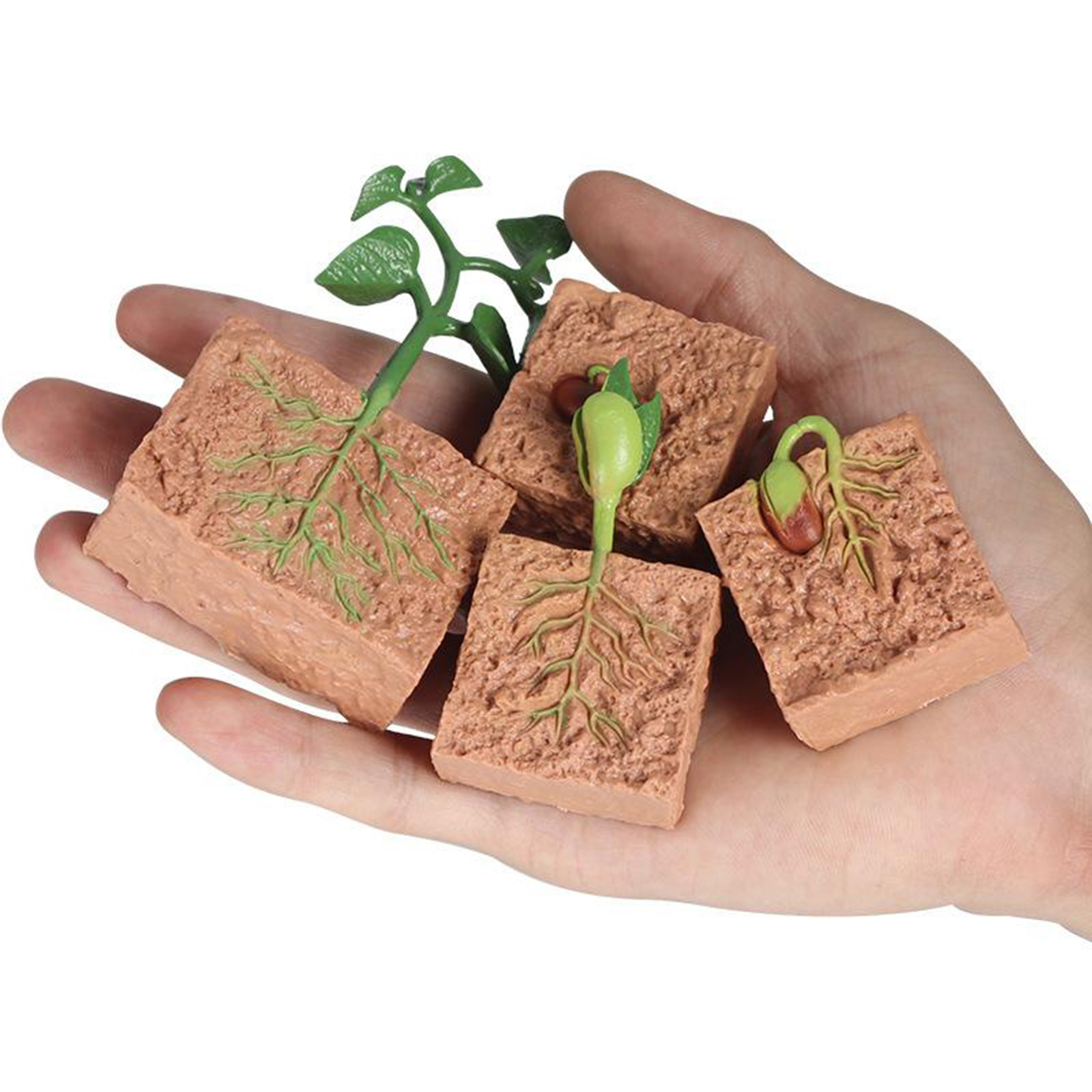 Kids Plant Seeds Growth Life Cycle Playset Cognitive Toys Teaching Aids 2