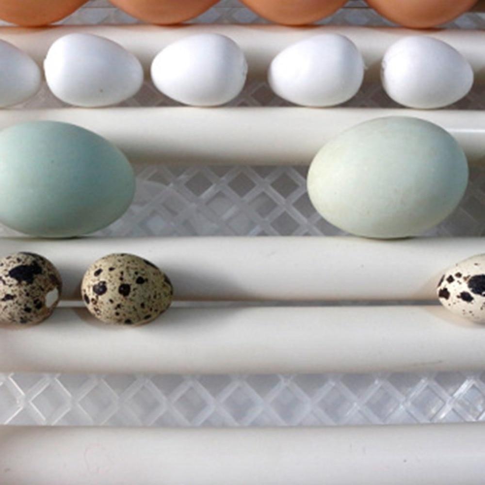 pássaro ovo incubadora automática ferramenta de incubação agrícola