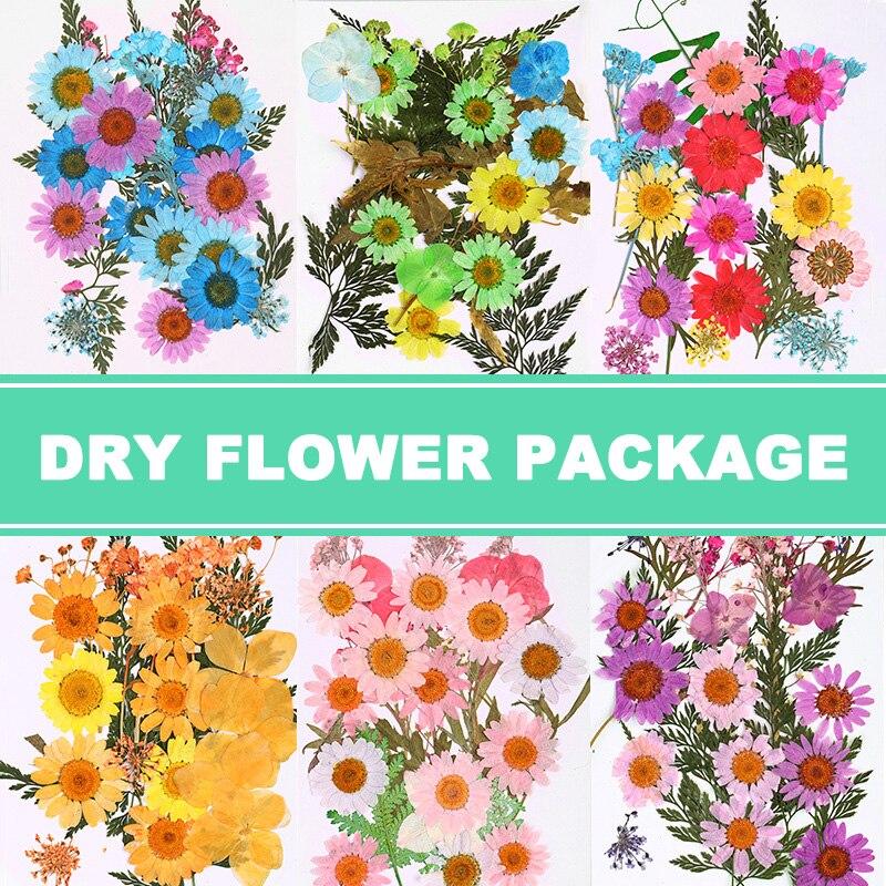 Pressionado flor misturada flores secas diy arte decorações florais coleção presente artesanato diy ghs99
