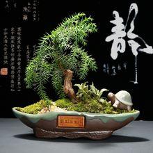 Креативный керамический цветочный горшок для сада горшки суккулентных