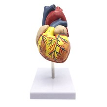 1: 1 modelo de coração humano, anatomicamente preciso modelo de coração tamanho vida esqueleto anatomia para ciência sala de aula estudo exibição