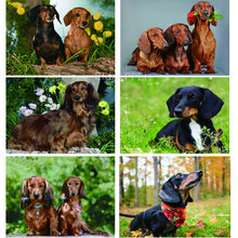 Full Round Professor Dachshund Diamond Painting Animal Dog Diamond Embroidery cute pets 5D drill Rhinestones Picture By Numbers(China)