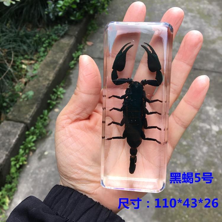 Escorpião preto amarelo escorpião resina chicote escorpião âmbar verdadeiro inseto peças rei escorpião