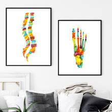 Акварельные кости плакат с ногой человеческая анатомия позвоночник