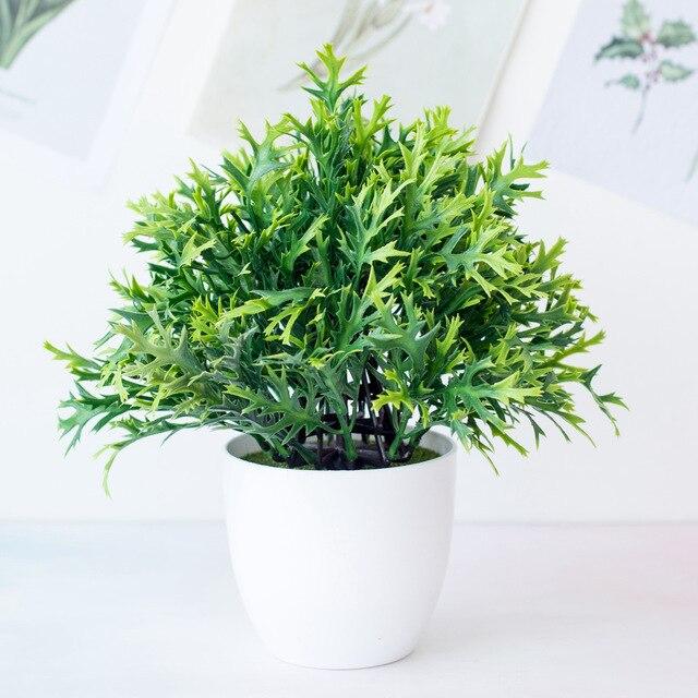 Planta antimosquitos Asparagus 15