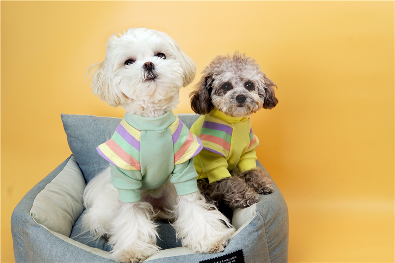 Cute small dogs clothes shirt (2)