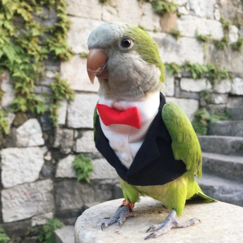 Parrot Clothes Original Hand-made Custom Bird Clothes Cute Suit Blazers For Cockatiel Sun Parakeet Monk Parakeet Macaw Cockatoo