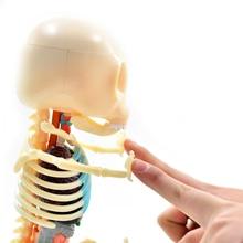 Big Bear 4D Master Artist Jason Freeny Puzzle Assembly Toy Perspective Skeleton Anatomical Model