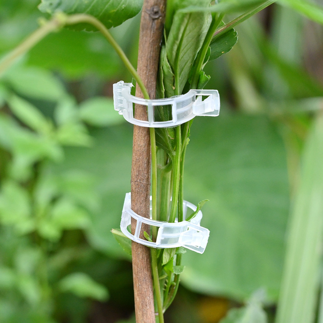 50/100pcs Reusable Plastic Plant Support Clips Plants Hanging Vine Clip Garden Greenhouse Fork Vegetable Tomatoes Clips Supplies 2