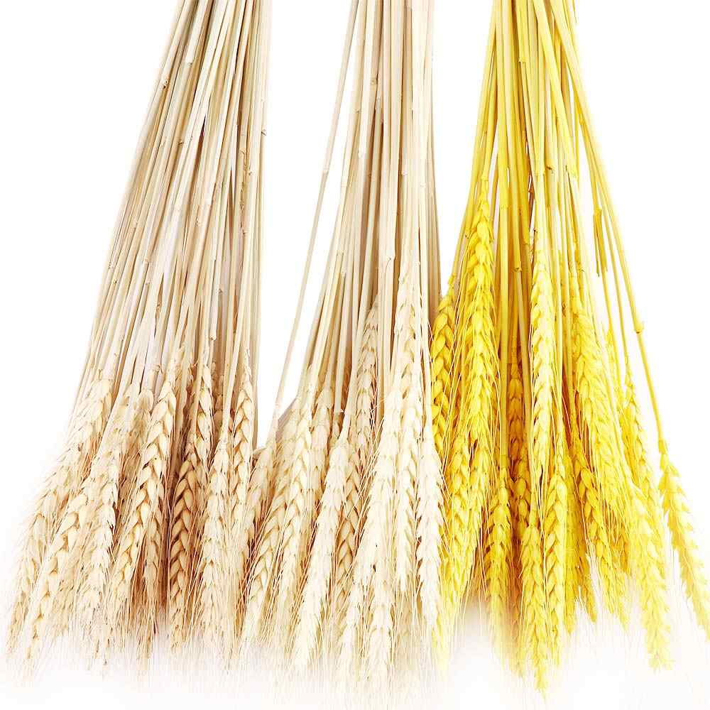 50 Pcs Dried Flower Natural Wheat Ears Bouquet Wedding Party Home Decor Branch
